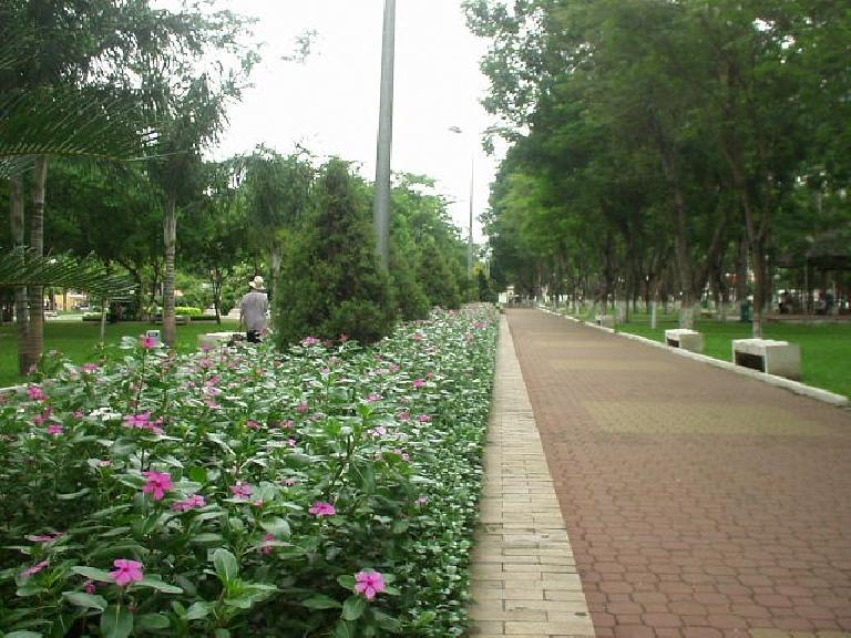 Flowers in 23/9 Park.