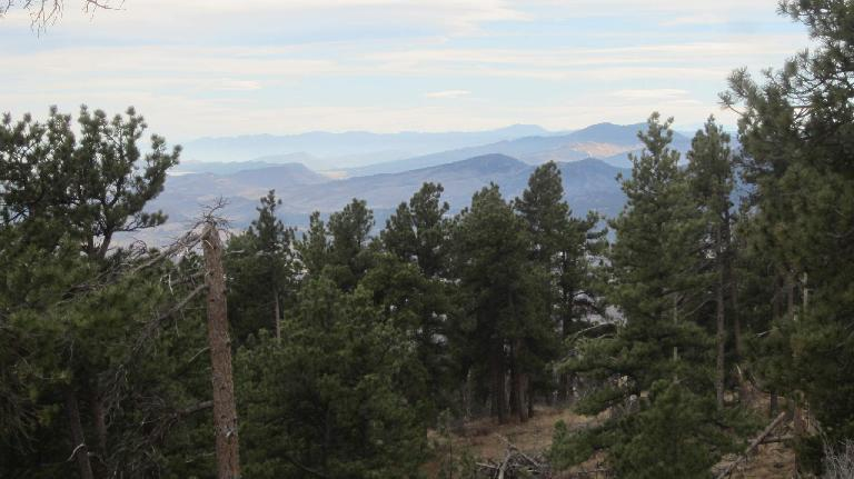 green pine in Horsetooth Mountain Park with mountains to the west