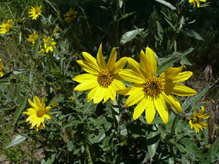 More yellow flowers.