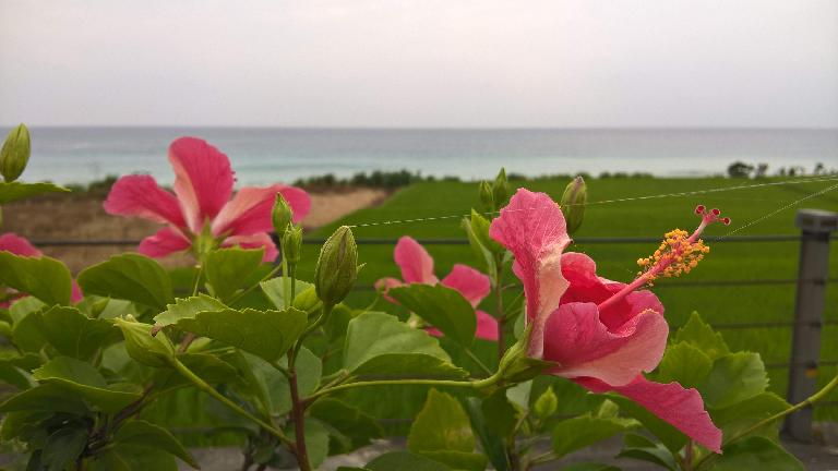 Flowers and Pacific Ocean off Highway 11 across from the Tropic of Cancer tower.