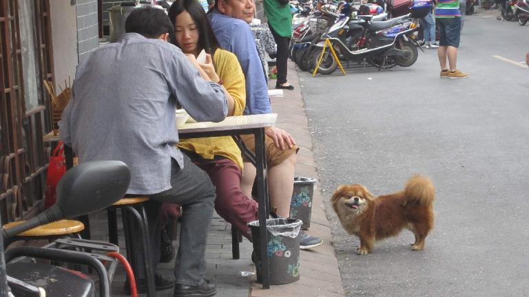 A dog came to visit this couple eating near Tunxi Ancient Street. (May 20, 2014)