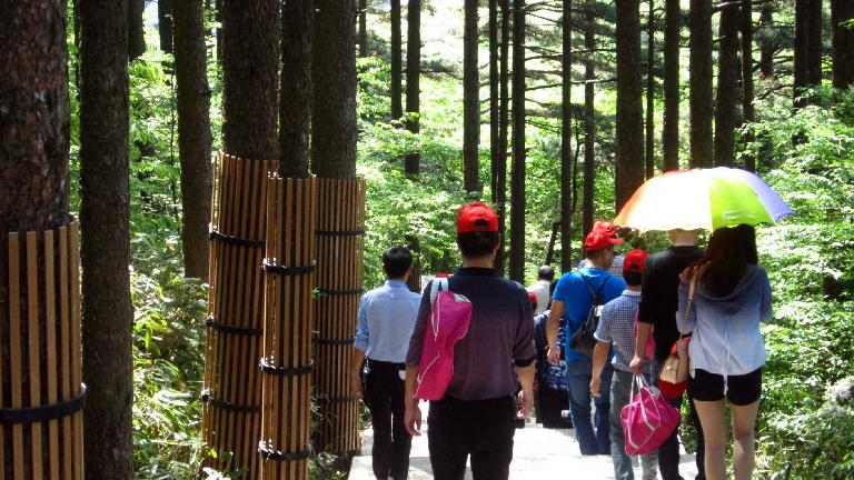 Hiking into the Huangshan Mountains behind another tour group.