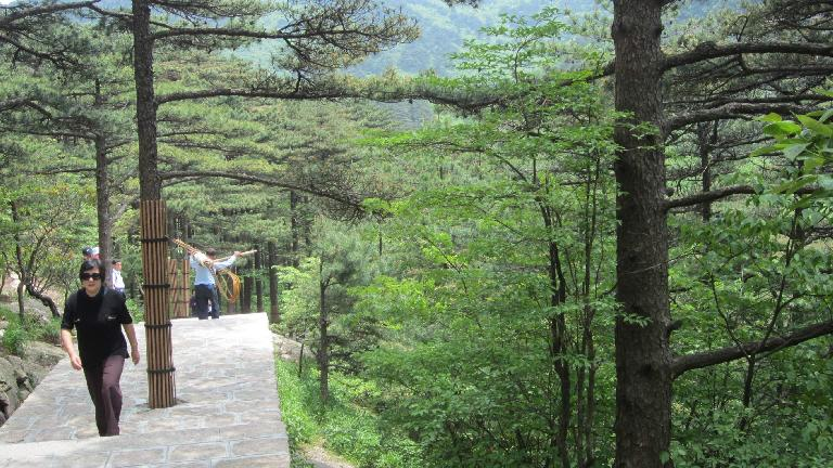 Trees in the Huangshan Mountains.