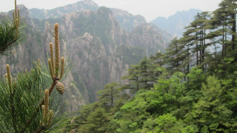The Huangshan Mountains.