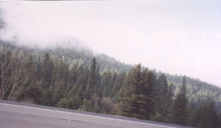The Great Smokies of Tennessee?  No, this is Humboldt County from US-101!