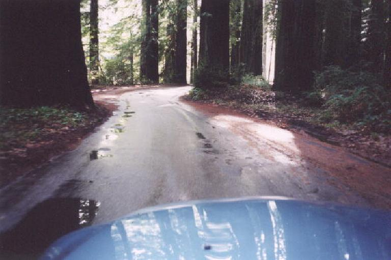 The view from my blue Z3 of the Redwoods near the Avenue of the Giants.  More pictures to come!