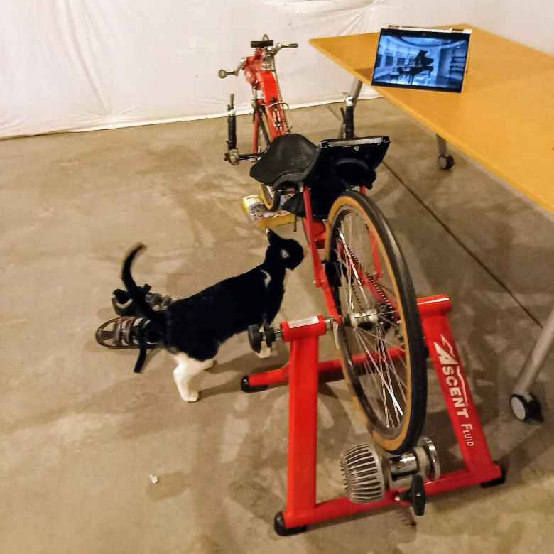 black and white cat, red Reynolds Wishbone Recumbent, red Ascent fluid trainer, convertible laptop on IKEA table