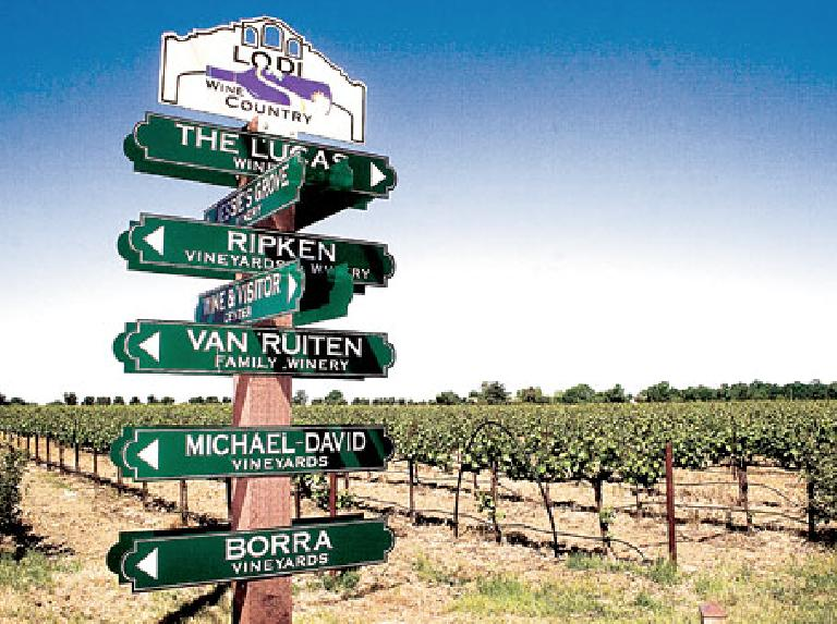 The Lodi Wine Trail. Photo: Creative Juices LLC.