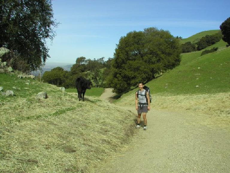 Felix Wong with the cow. Photo: Adrian Mikolajczak.