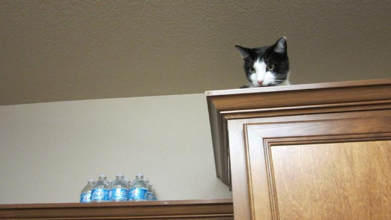 Oreo watching the humans below. (October 23, 2013)