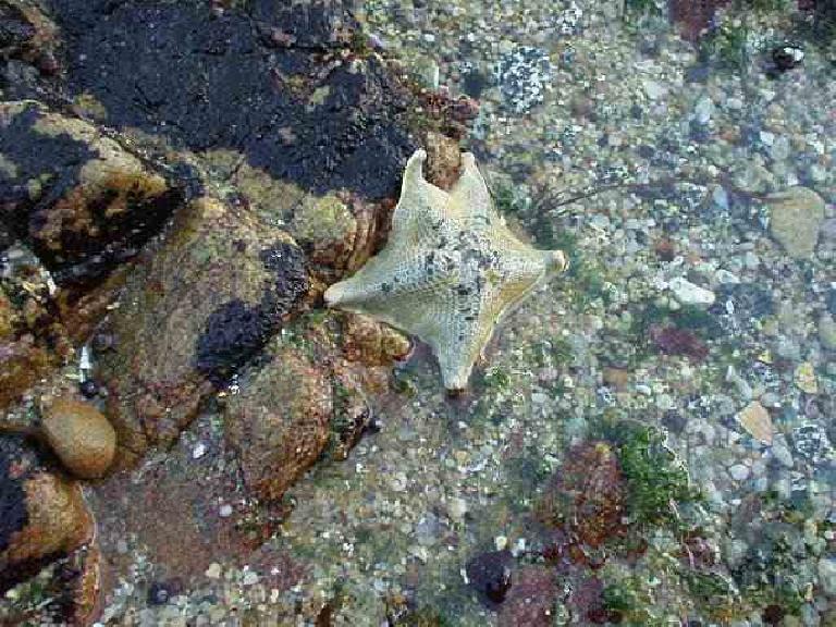 Flexible starfish...