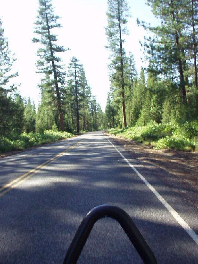 From Highway 40 to Highway 46 was Highway 45.  This provided 10 continuous miles of moderate climbing, with lots of trees and, again, no traffic.