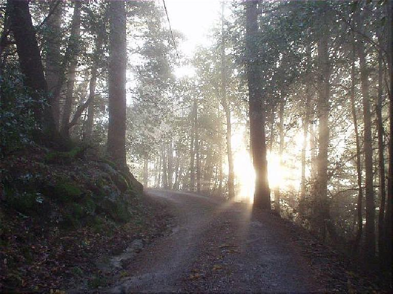 Up the short trail to the Christmas tree farm at the top of Mt. McPherson, the trees broke up the rays of a dawning sun.