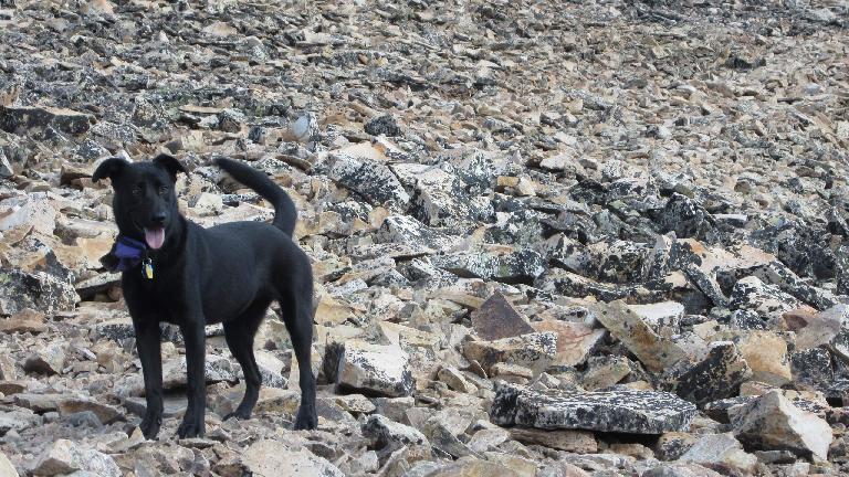 Diana's dog Dani.