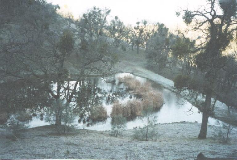 Ice in the pond! (January 27, 2002)
