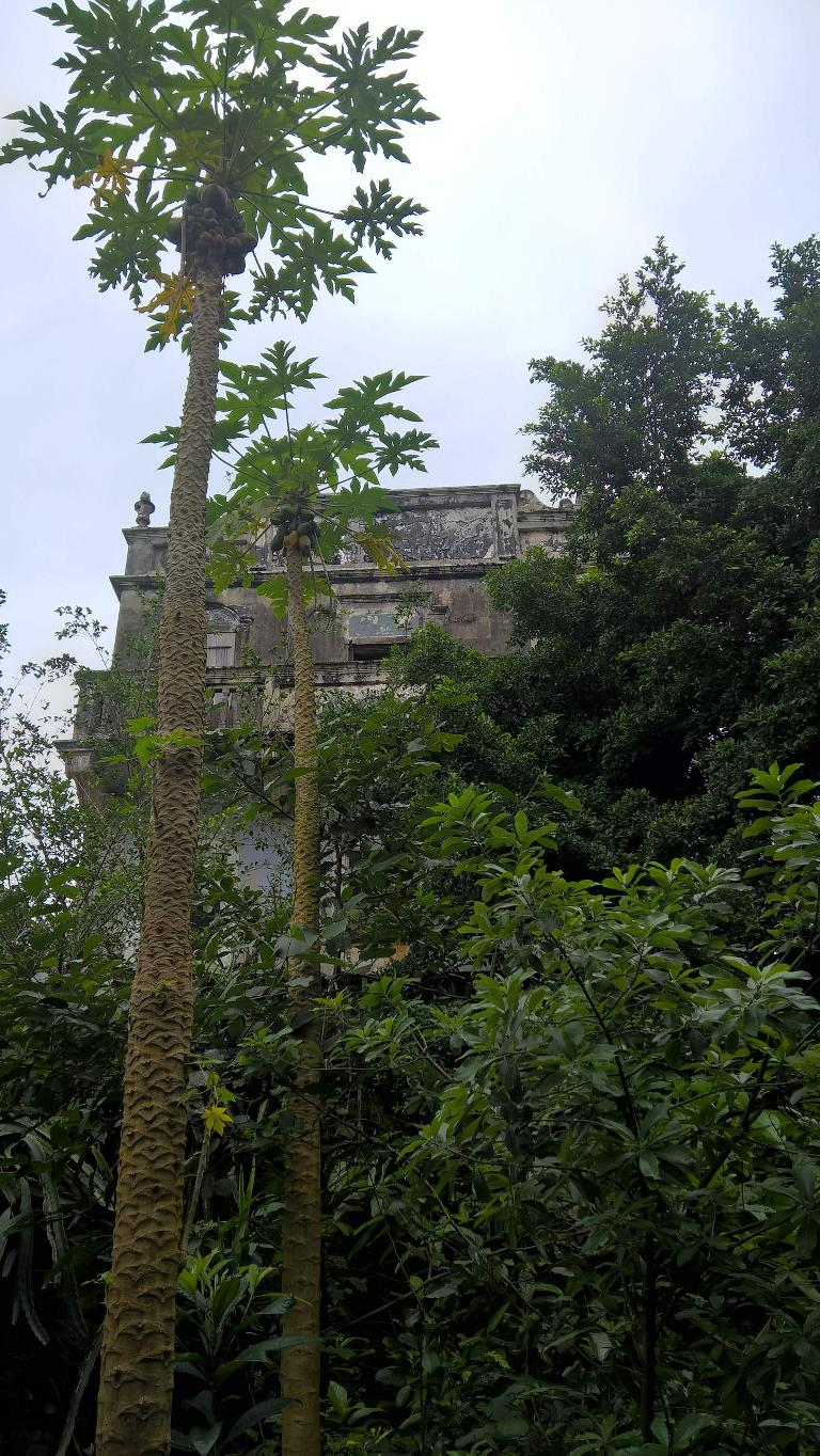 The five-story house my dad grew up in. The papaya trees were not there when he lived there.