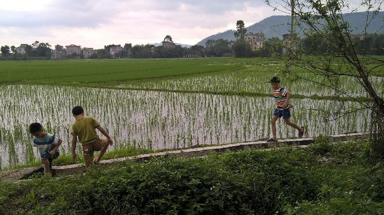 Local kids running by a rice field.  My dad's grandmother would take him to the building second to the right while she gambled. It was the last Wong house; to the left was the Kwan village (his grandmother was a Kwan).