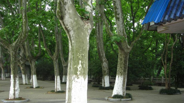 Trees at the Sun Yat Sen Mausoleum.
