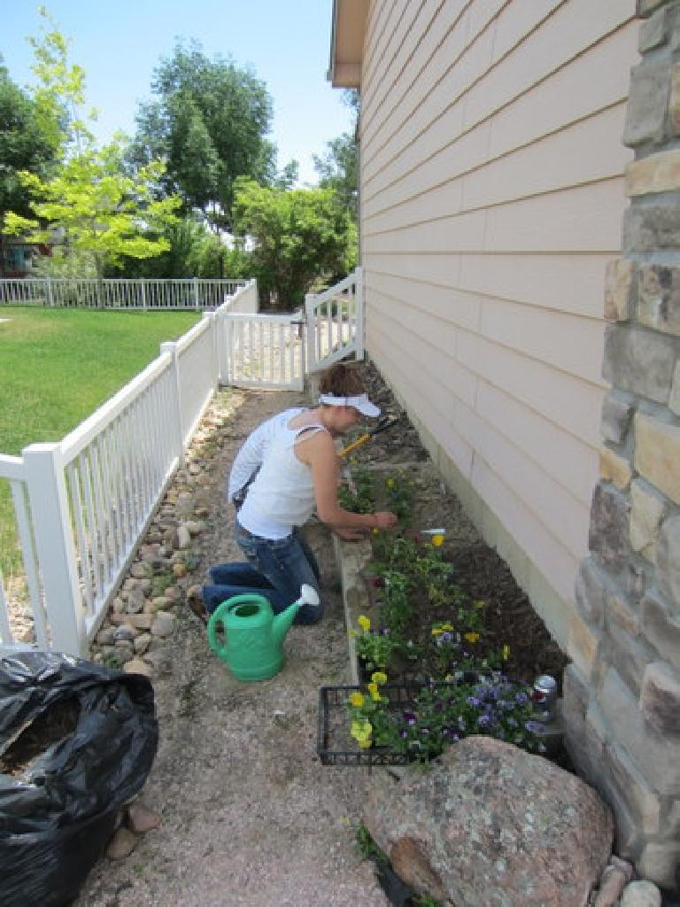 Kelly planting some flowers in my flower garden as a surprise for me on my birthday, with Tim lending her a hand. (June 26, 2012)