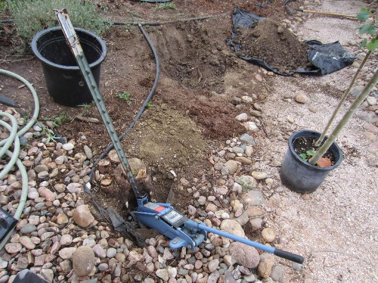 This was the location of the old/dead aspen trees that I planted the new aspen tree by.  It took me a while to remove the tree stake---ultimately accomplished with the use of a 2-ton car jack!