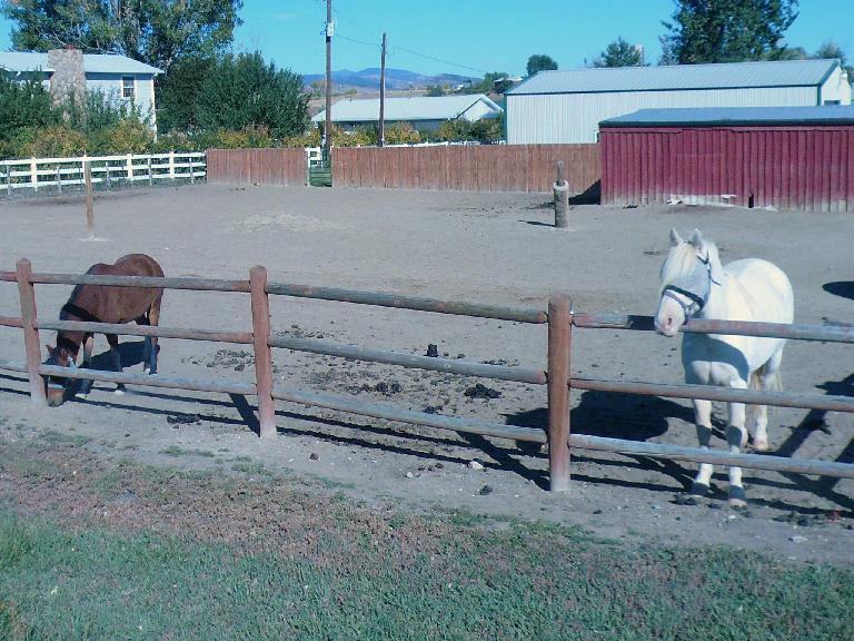 [Mile 26, 10:05 a.m.] Horses.