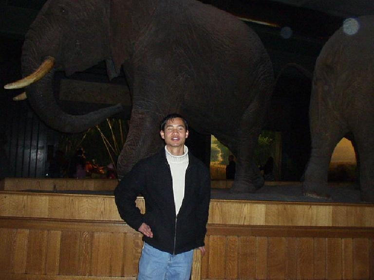 In NYC, Carolyn and I went to the Natural History Museum.  Here is a rather sinister-looking photo of Felix Wong with an elephant.