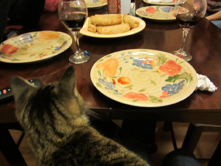 Tiger checks out some egg rolls.