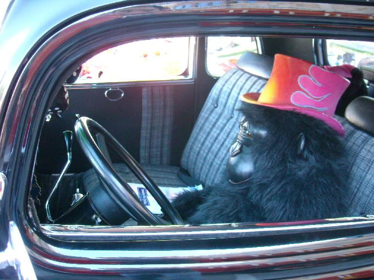 A gorilla in the driver's seat.