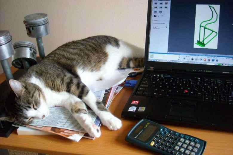 Tiger sleeping on the job.