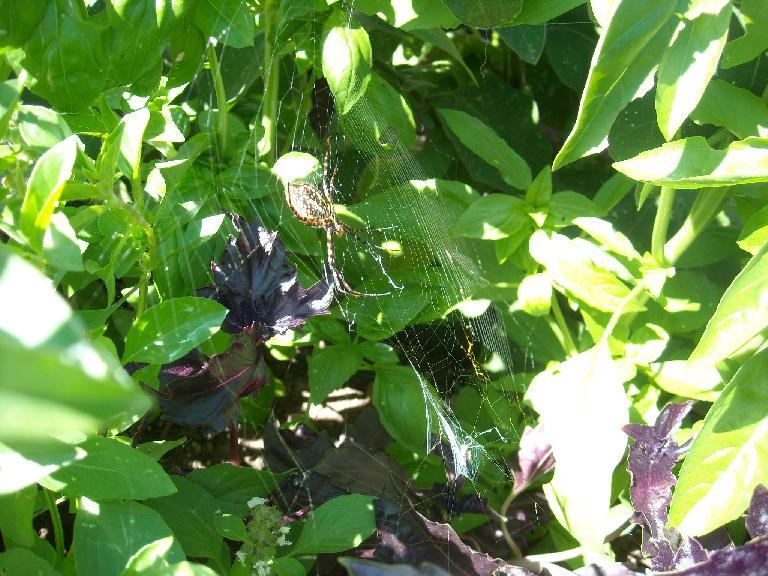 Huge spider.