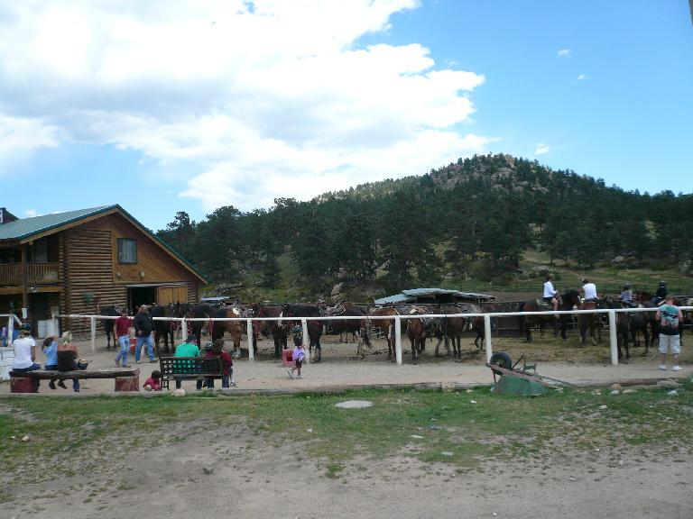 [Mile 85, 12:08pm] Horses at the Sombrero Ranches in Estes Park.