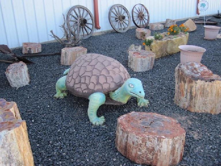 A giant turtle among petrified wood.