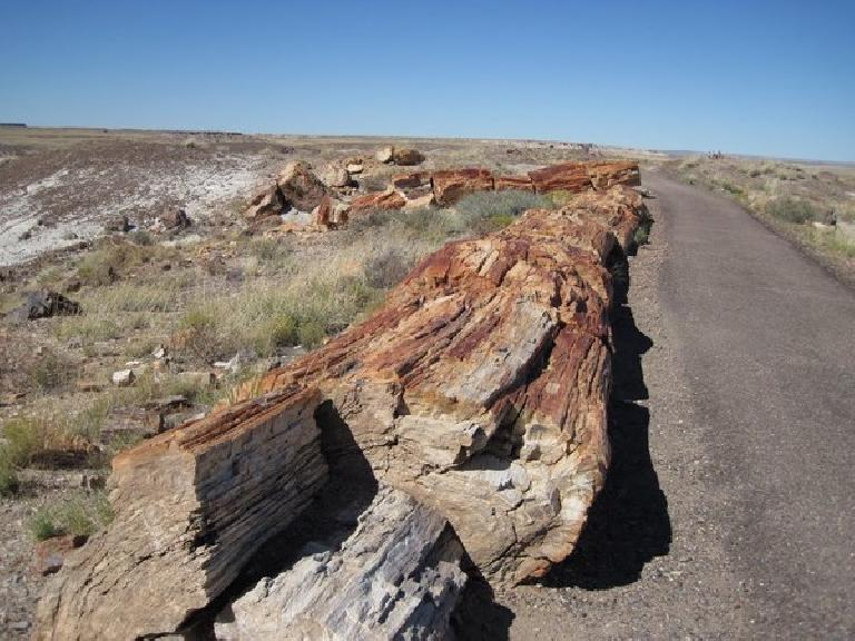 More petrified wood.