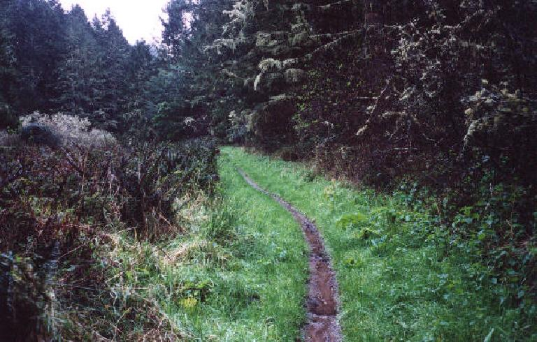 Singletrack on the Coast Trail. (February 19, 2001)