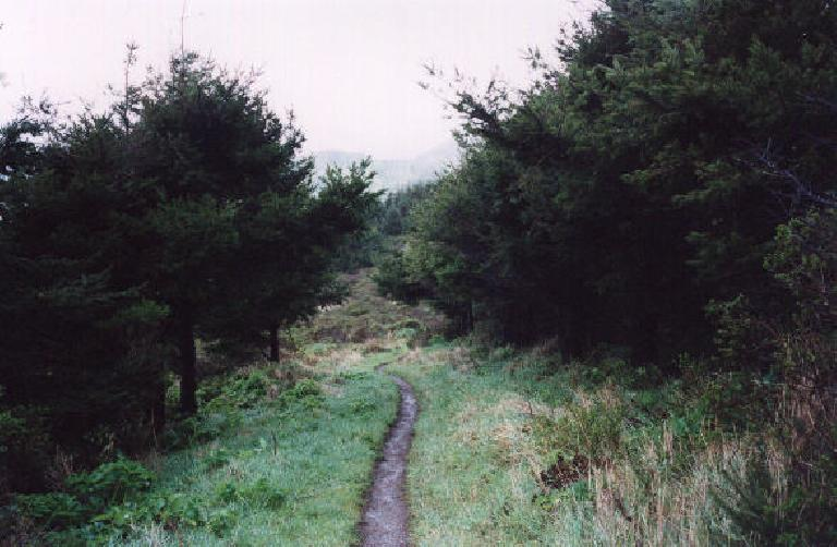 The Coast Trail enveloped by a canopy of trees. (February 19, 2001)