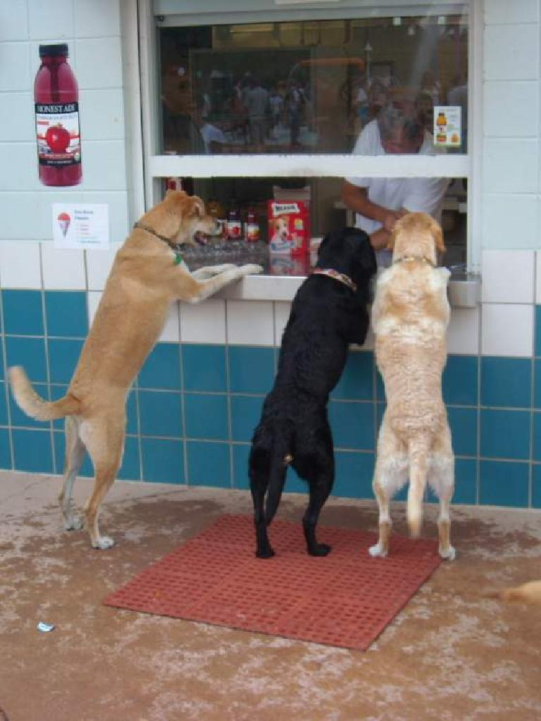 Serving some doggie customers.