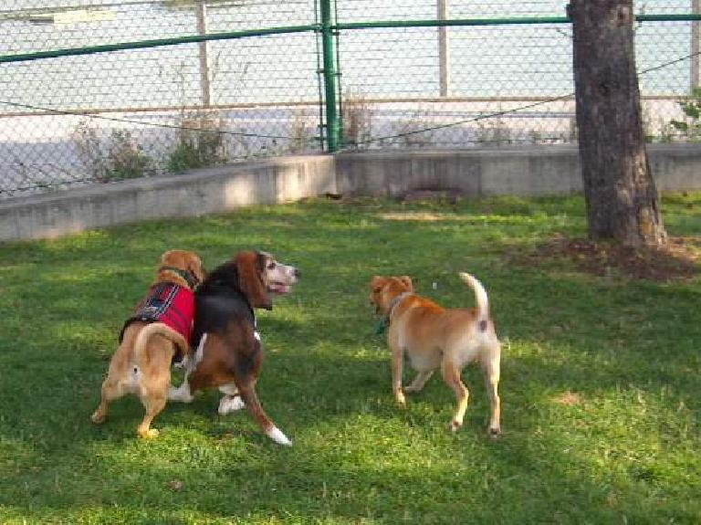 Tori's dog (left) found some friends.