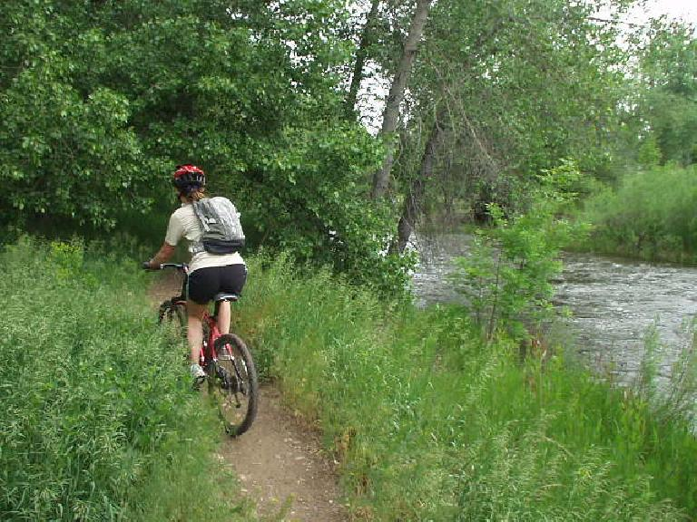 Following Kimi along some single track between the Poudre River and the Poudre (Recreation) Trail.