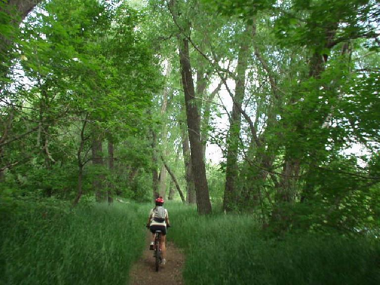 Through a beautifully green nature preserve with tall trees...