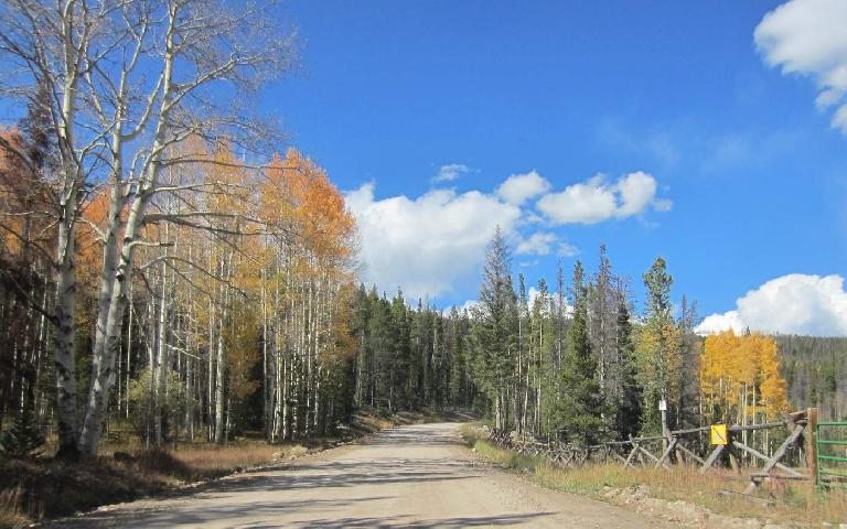 Aspens along County Rd. 103.