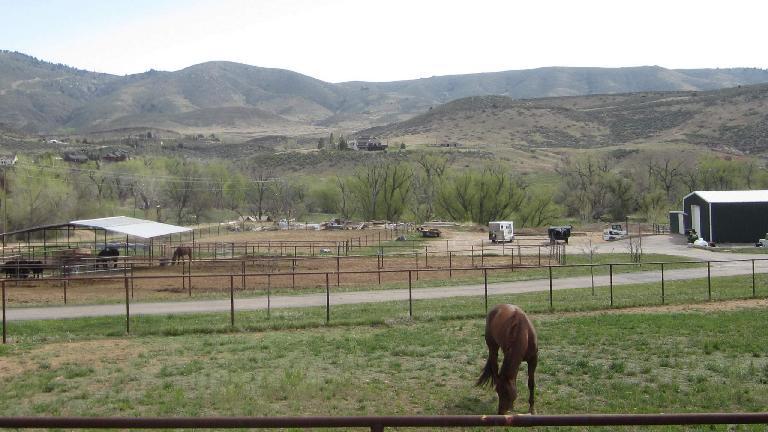 Horse in Masonville, Colorado.
