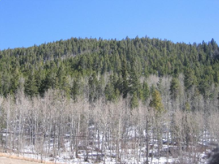 More evergreen trees. Photo: Ryan Peters.