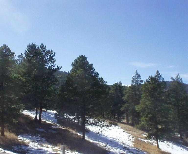 It has been over 60 degrees out here, but snow remains on the ground between the evergreen trees in shaded areas.
