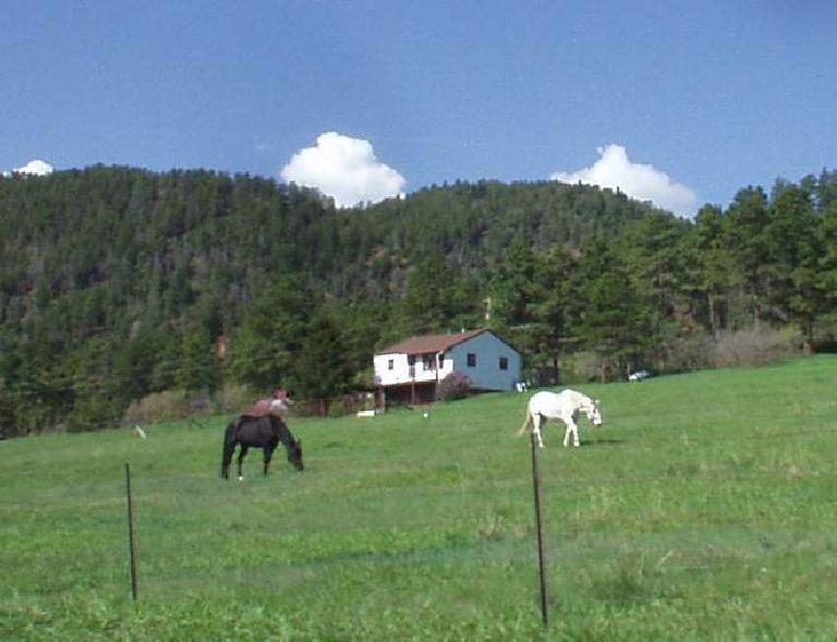 [Mile 53, 9:30am] Wild horses.