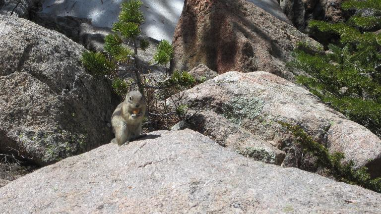 Chipmunk with a almond.