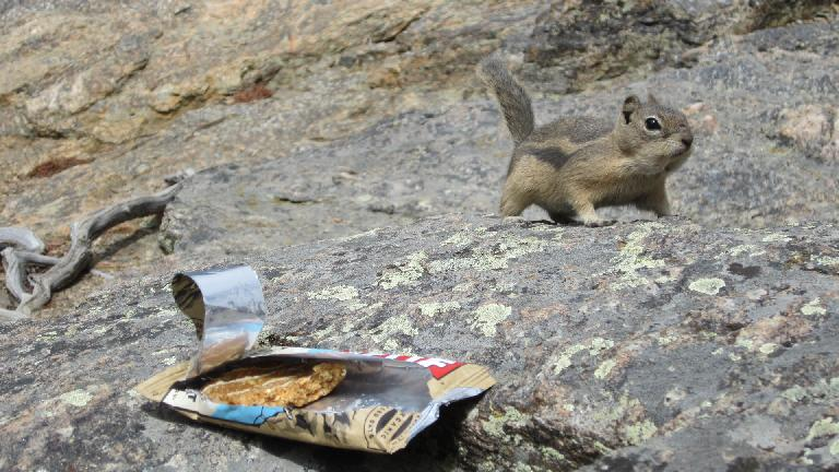 The chipmunks liked Clif bars too, apparently.