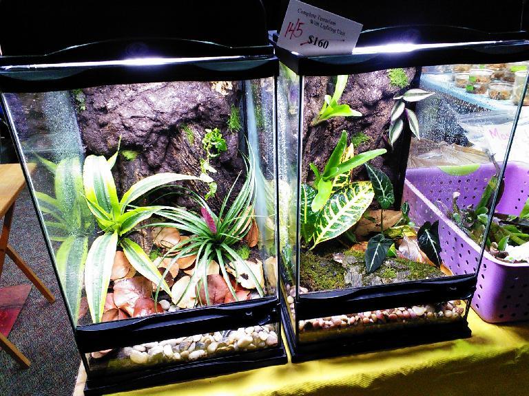 Nice terrariums for sale.