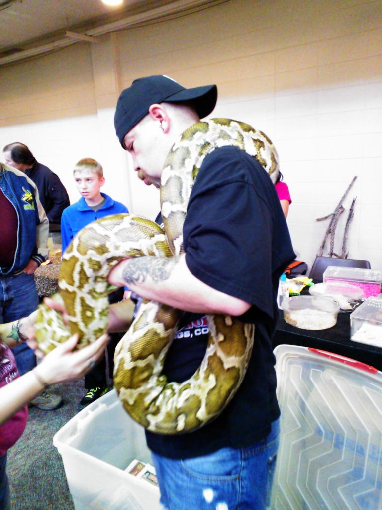 A very large boa.
