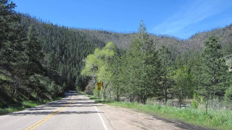 Poudre Canyon, green trees