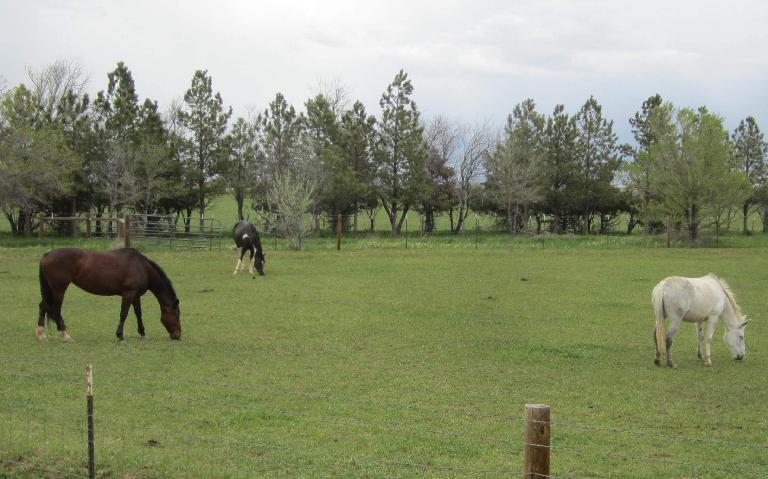 Horses in Northern Colorado